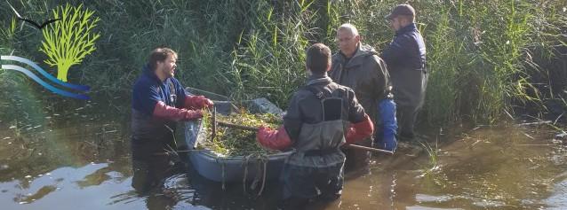 Opération d'arrachage de la Jussie - Lac du Plessis